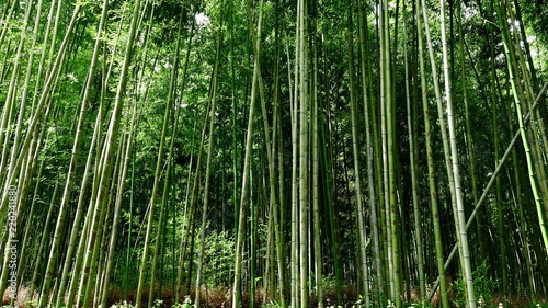 Bamboo Bambus In Der Natur Buy This Stock Photo And Explore