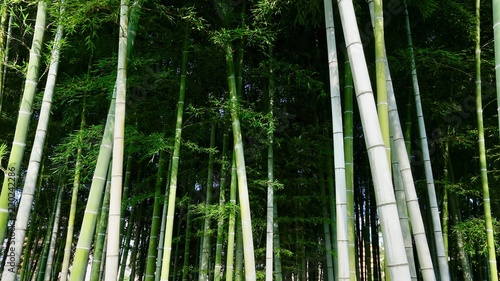 In de dag Bamboo Bamboo, Bambus in der Natur