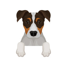 Jack Russell Terrier Hanging On Invisible Fence. Dog With Adorable Muzzle. Flat Vector For Poster Or Banner Of Pet Shop