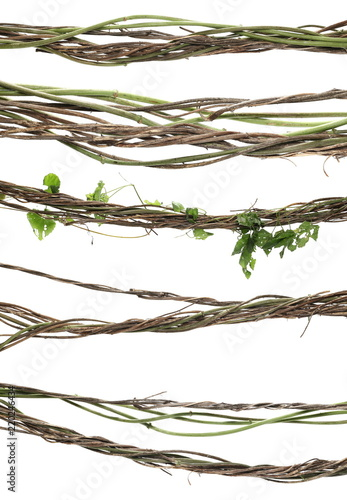set wild dry liana jungle vine isolated on white background, clipping path Wallpaper Mural