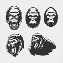 Set Of Gorilla Heads. Vector M...
