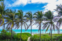 Scenic Entrance To The Beautiful Palm Turquoise Tropical Beach.