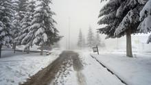 Snowy Road Leading Through Den...