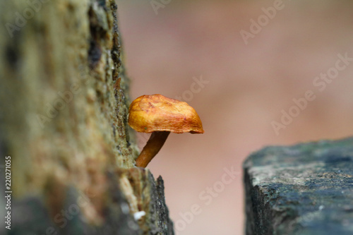 Fotografie, Obraz  Little mushroom