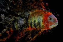 Fisch Mit Rauch