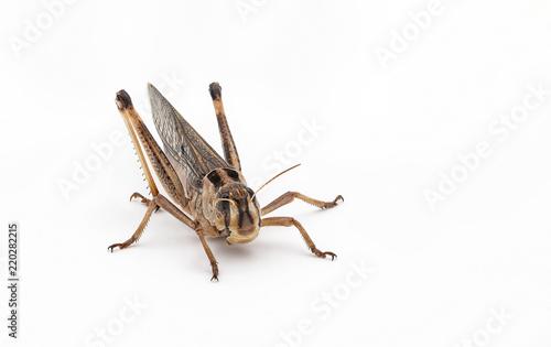 Canvastavla Essbare Insekten