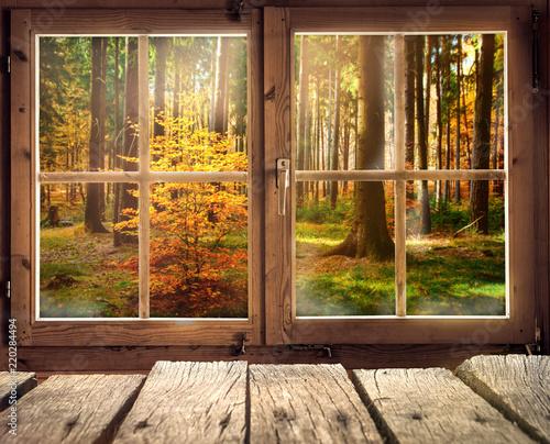 Fotografie, Obraz  Holzhütte mit Ausblick auf einen Herbstwald