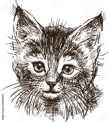 Wall Murals Hand drawn Sketch of animals Sketch of the head of a kitten