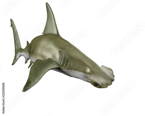 Obraz shark hammerhead - fototapety do salonu