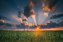Summer Sunset Evening Above Countryside Rural Cornfield Landscape