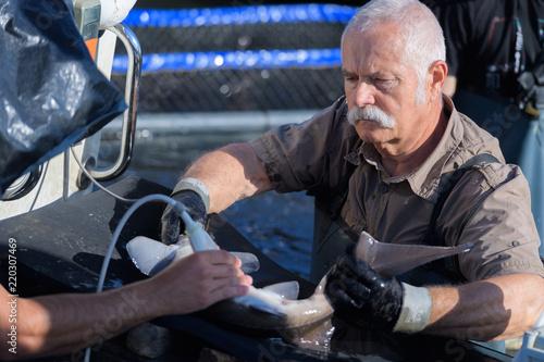 Fotografie, Obraz  fisherman sells fresh fishes directly in the harbor
