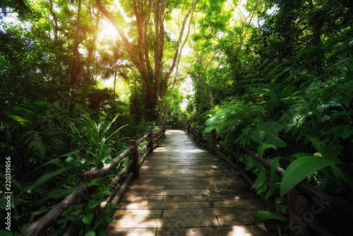 Foto op Canvas Weg in bos Beautiful rain forest at nature trails in Thailand is a very popular for photographer and tourists. Natural and Travel Concept.