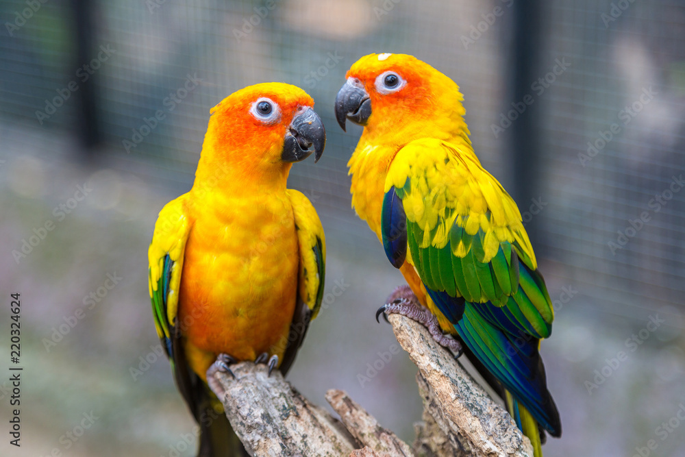 Colorful parrots in Safari World Zoo