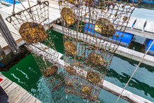 Pearl Farm In Halong Bay, Viet...