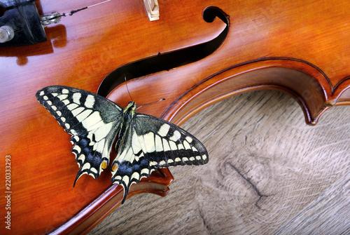 Foto auf Gartenposter Schmetterlinge im Grunge Violin and butterfly on a wooden table.Swallowtail butterfly. Papilio machaon