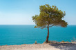 Beautiful view of blue sea and sky. Pine.