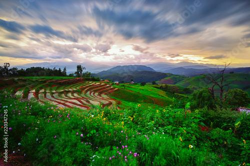 Poster Rijstvelden Viewpoint,Sunset,Terraced rice field in Pa Pong Pieng,Mae Chaem,Chiang Mai,Thailand