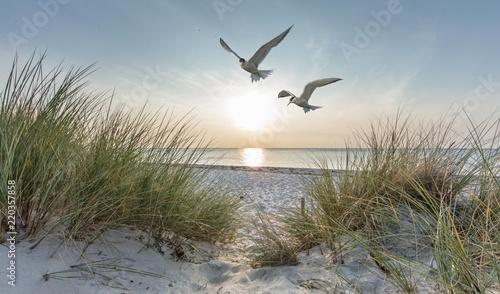 Foto auf AluDibond Nordsee Seeschwalben am meer