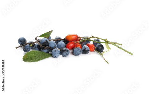Fototapeta Fresh ripe blackthorn berries and rose hips with twig and leaves, isolated on wh