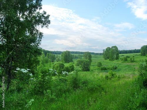 Foto op Aluminium Blauwe hemel siberian summer landscape