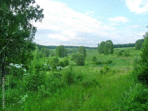 Deurstickers Groene siberian summer landscape