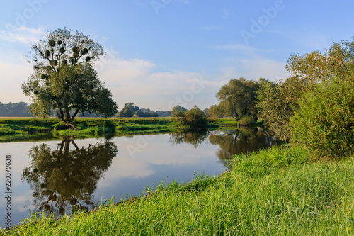 Small river on the background of grass-covered banks against blue sky. River landscape on a summer morning