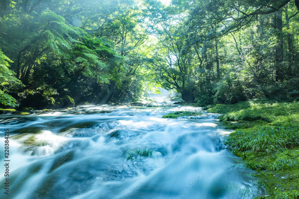 Fototapety, obrazy: 菊池渓谷の光芒