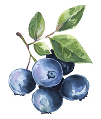 Blueberries watercolor illustration