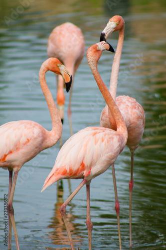 Keuken foto achterwand Flamingo группа розовых фламинго