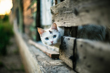 Cute White Cat Looking Out Of ...