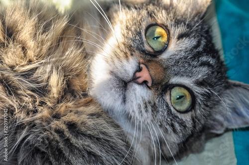 Wall Murals Owl Macro cat muzzle