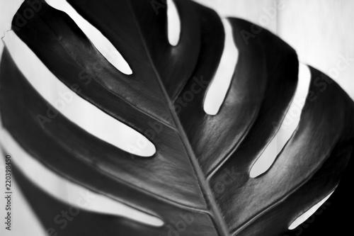 Αφίσα  Black and white tropical leaves on white background photograph