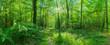 canvas print picture - Landschaft zauberhafter Laubwald mit Fußweg im Frühling im Gegenlicht - Landscape of enchanting deciduous forest with footpath in spring