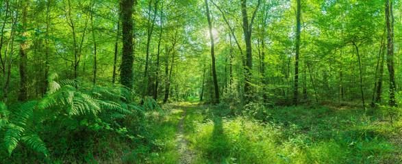 Landschaft zauberhafter Laubwald mit Fußweg im Frühling im Gegenlicht - Landscape of enchanting deciduous forest with footpath in spring
