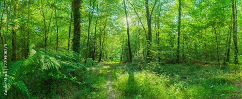 Foto Landschaft zauberhafter Laubwald mit Fußweg im Frühling im Gegenlicht - Landscap