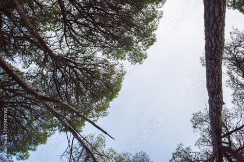 Vista del cielo con árboles