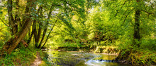 Beautiful Forest Panorama With Brook And Bright Sun Shining Through The Trees