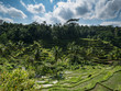 rice terrace tegalalang green in bali indonesia