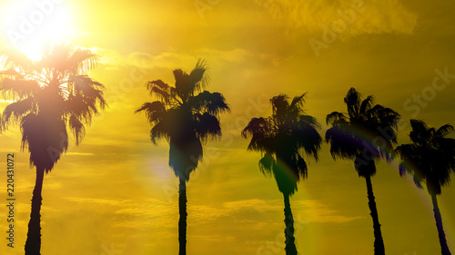Deurstickers Bomen palm trees against the background of the evening sky, the setting sun. tropics, resort, nature, vacation