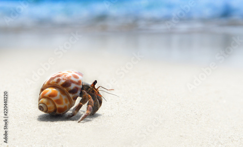 Photo  hermit crab walking on the beach.