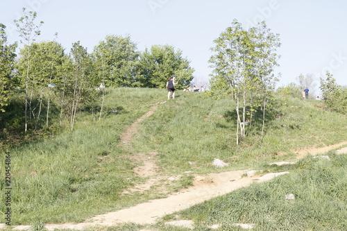 Foto op Canvas Olijf rural landscape