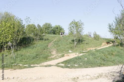 Spoed Foto op Canvas Olijf rural landscape