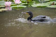 スイレンの咲く池で、...