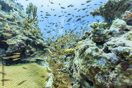 Ishigaki Island Diving - Horda młodych ryb