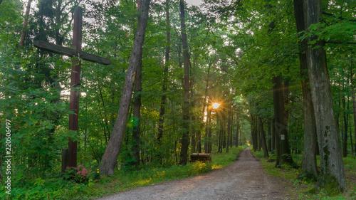 Foto op Plexiglas Weg in bos SONY DSC