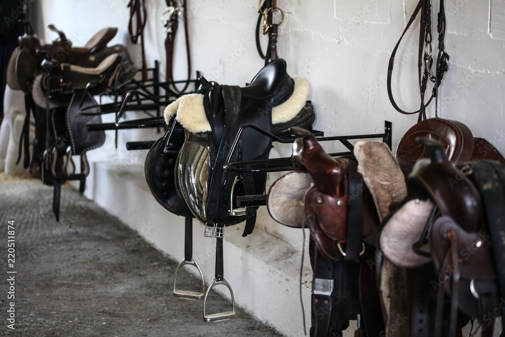 Fototapeta Leather horse saddles and equipment resting on hangers in tack room