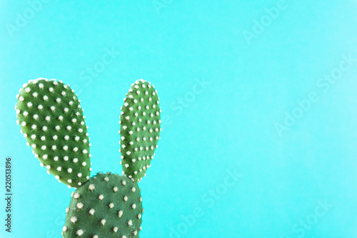Cactus Green On A Plain Color Background With Copy E