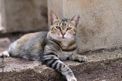 Photo felidae