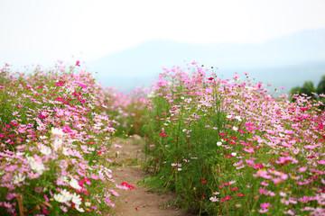Fototapetapink flower garden