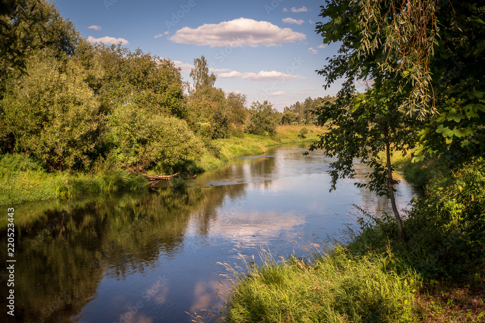 Fototapety, obrazy: Forest landscape. Summer warm sunny day in the forest by the river